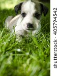 Stock photo adorable mixed breed puppy lying in the grass 405794542
