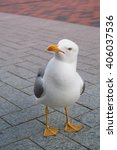 Funny Seagull Bird Standing...