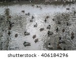 Ducks And Drakes On The Lake I...