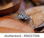 Small photo of An unsuspecting fly takes a moment to rest his tiny wings and take in the scenery.