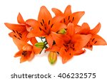 Beautiful Orange Lily Flower...