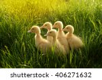 Five Small Ducklings Outdoor I...