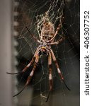 Small photo of Golden orb weaver spider strings an elaborate web