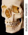 Small photo of Cranial Bone (Flat lighting)