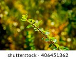 shot of a branch made in late... | Shutterstock . vector #406451362