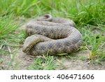 dice snake  natrix tessellata  | Shutterstock . vector #406471606