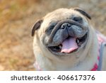 Stock photo funny face of pug dog fawn pug dog sitting under tree with blurry morning sunlight background 406617376