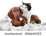 Stock photo cat and dachshund on a plaid isolated on white 406644355