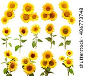 Sunflowers Collection White Background - Fine Art prints