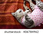 cat patients who have undergone ... | Shutterstock . vector #406784962
