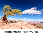 Green Tree In The Desert