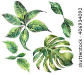 summer set of exotic watercolor ... | Shutterstock . vector #406934092