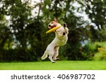 Stock photo nice jump by jack russell terrier dog catching flying disk 406987702