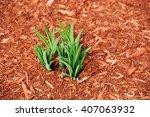 New Growing Plant In Garden...