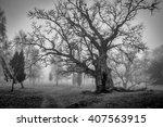 Old Swedish Oak Tree In...