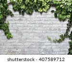 Climbing Plant On The White...
