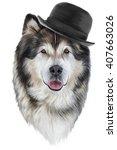 drawing dog alaskan malamute ... | Shutterstock . vector #407663026