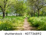 Forest Path On A Sunny Spring...