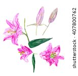 set lily flowers. watercolor... | Shutterstock . vector #407800762