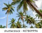 Palm Trees On Blue Sky...