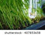 scientist research genetic...   Shutterstock . vector #407853658