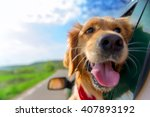 Stock photo golden retriever looking out of car window 407893192
