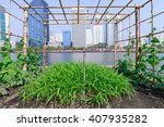 vegetable plantation in urban... | Shutterstock . vector #407935282