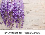 Violet Wisteria Flowers On...