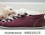 kitten playing in new home | Shutterstock . vector #408210115
