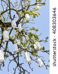 Paper Lanterns On Tree Branch