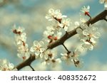 close up view of a spring... | Shutterstock . vector #408352672