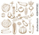 cabbage  onion  tomato  pepper  ... | Shutterstock .eps vector #408499582