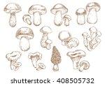 edible mushrooms with boletus ... | Shutterstock .eps vector #408505732