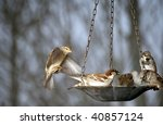 Five Sparrows Share A Bird...