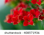 Flower With Red Flowers With...