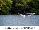 the fighting great egrets  ... | Shutterstock . vector #408601642