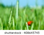 a blooming red poppy growing... | Shutterstock . vector #408645745