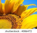 Yellow Sunflower Macro Shot