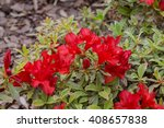 red spring flowers in the...   Shutterstock . vector #408657838