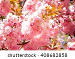 pink flowers background | Shutterstock . vector #408682858