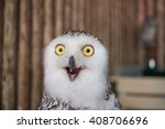 Stock photo close up snowy owl eye with wooden background 408706696