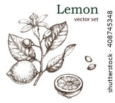 hand drawn vintage lemon plant. ... | Shutterstock .eps vector #408745348