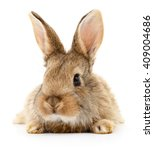 small brown rabbit isolated on... | Shutterstock . vector #409004686