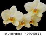 orchid | Shutterstock . vector #409040596