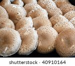 Farmers market: Mushrooms - stock photo