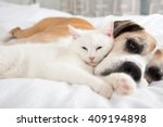 Stock photo close up of white cat loving boxer mix dog sleeping together on bed 409194898