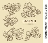 vector set  hazelnut. hand drawn   Shutterstock .eps vector #409319158