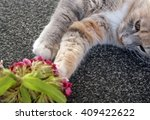 Stock photo kitten playing with flowers 409422622