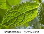 mint | Shutterstock . vector #409478545