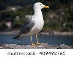 Seagull Standing On Rocks